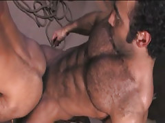 Bear Arabian fruit fucks man in doggy style